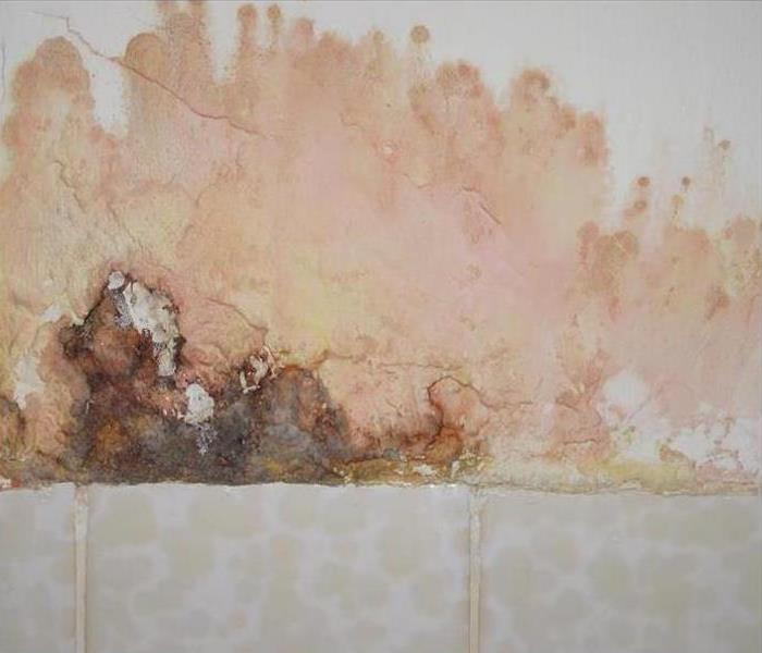 Mold Damage – Lilburn Bathroom