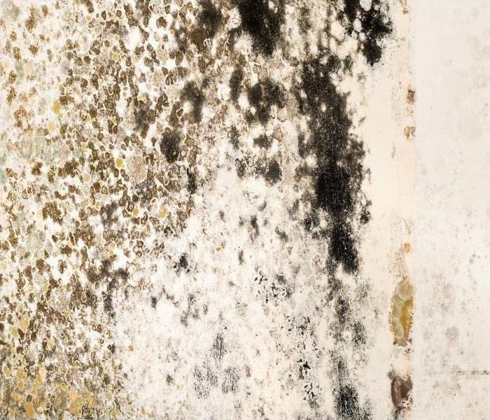 Mold Remediation Mold Damage Technicians In Pleasant Hill Describe The Importance Of Containment