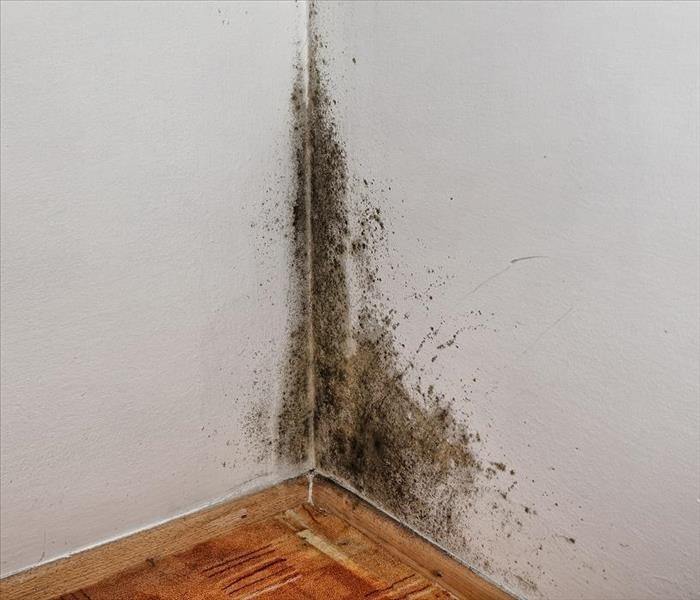 Mold Remediation Lilburn's Mold Damage Restoration Theories Explained