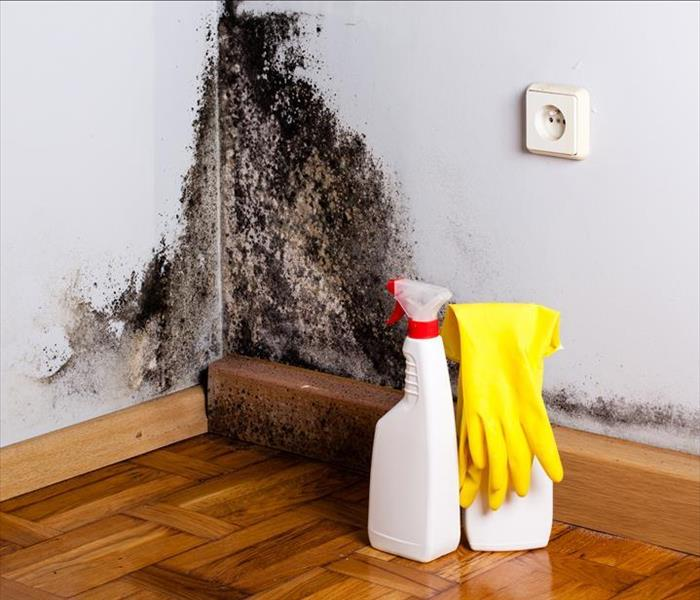 Mold Remediation Norcross Mold Damage or Soot? Call the Experts