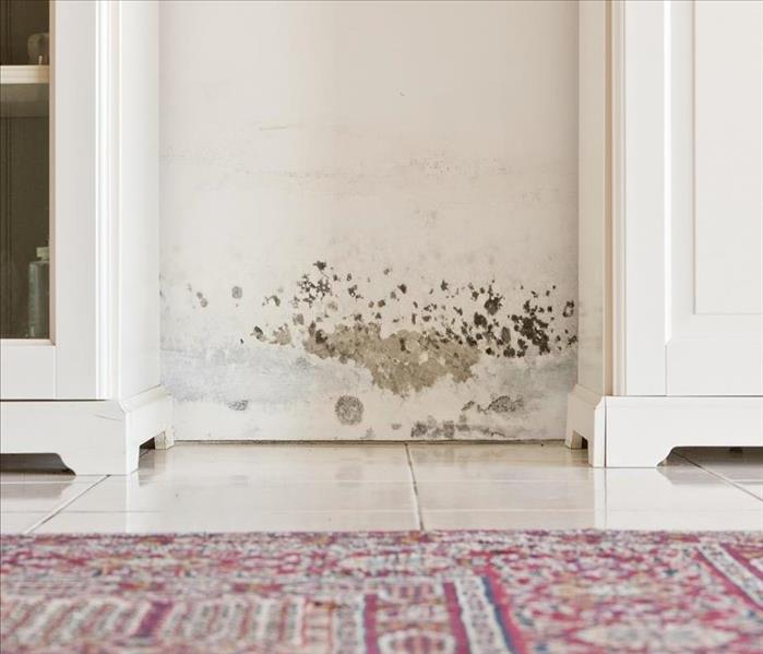 Mold Remediation Why Drying is Vital for Mold Damage Remediation in Pleasant Hill