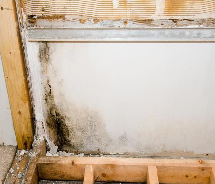 Mold Remediation The Truth About DIY Mold Damage Removal In Your Pleasant Hill Residence