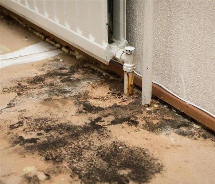 Commercial The Real Truth Behind Commercial Mold Damage Remediation in Pleasant Hill